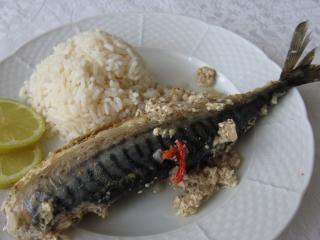 Makrele im Joghurt